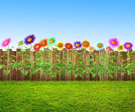 grass and flowers at backyard, spring background Stock Photo