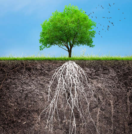 tree and soil with roots and grass 3D illustration Stock Photo