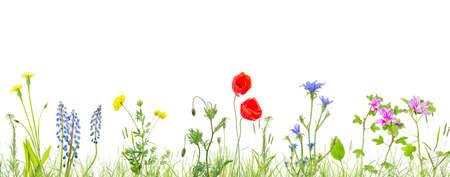 trawa i kwiaty na białym tle