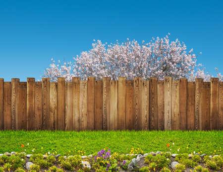 lentebloeiboom in achtertuin en houten tuinhek Stockfoto