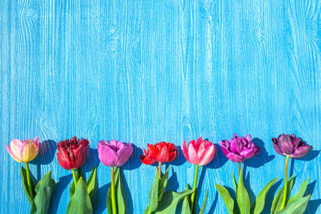 colorful tulips flowers spring background