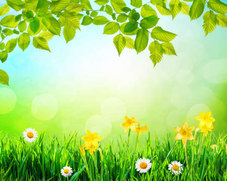 flowers and grass background with tree branch 免版税图像