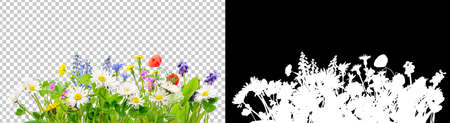 spring grass and daisy wildflowers isolated with clipping path and alpha channel Stockfoto
