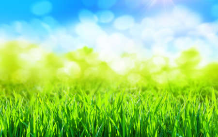 sunny green grass spring background