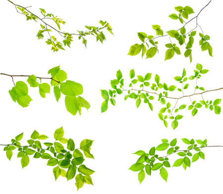 set of branches of tree isolated on white with leaves