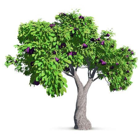 fig tree isolated with high detailed leaves, 3D illustration
