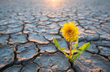plant groeit in woestijn droogte concept