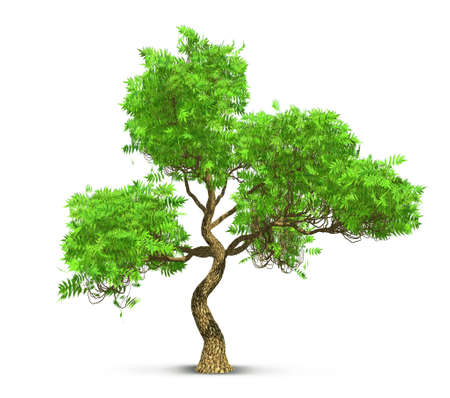 tree isolated with high detailed leaves, 3D illustration Banco de Imagens