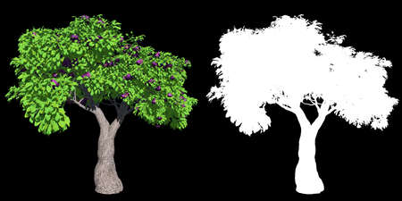 fig tree isolated with mask for easy isolation from background, 3D illustration