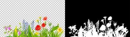 spring grass and daisy wildflowers isolated with clipping path and alpha channel Reklamní fotografie
