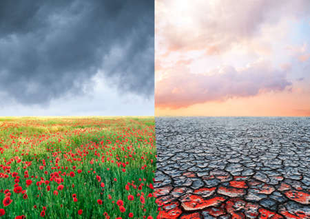 flower field to desert ecological concept and climate changing landscape 版權商用圖片