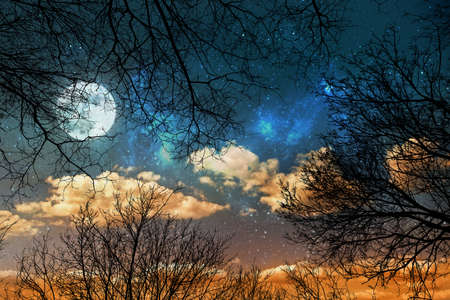 night sky background with stars, moon and clouds through trees Stock fotó - 129237920