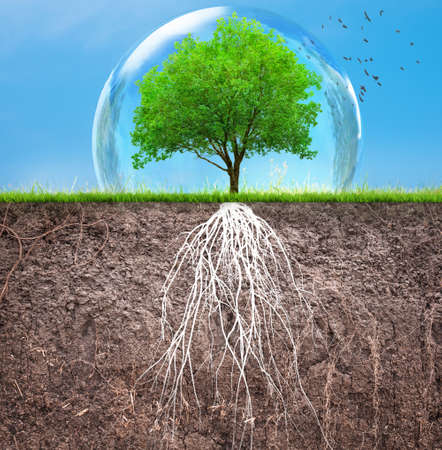 tree and soil with roots and grass, organic care concept Zdjęcie Seryjne - 129237918