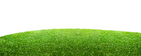 green grass isolated on white background Banco de Imagens