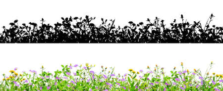 purple clover flowers and grass isolated on black background with alpha mask for easy isolation Banco de Imagens