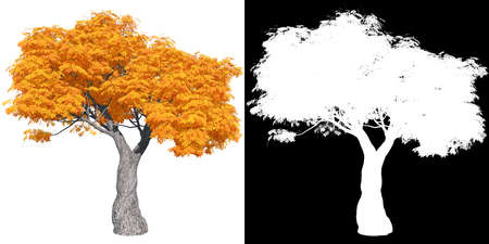 red autumn maple tree isolated with mask for easy isolation from background, 3D illustration