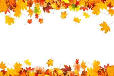 autumn leaves on white background Banco de Imagens