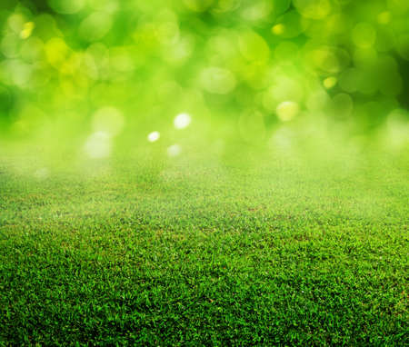 fond d'herbe verte de printemps