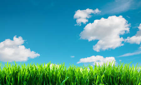 field with green grass background