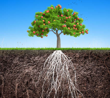 apple tree and soil with roots and grass 3D illustration Banco de Imagens