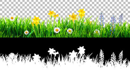 spring grass and daisy wildflowers isolated with clipping path and alpha channel Banco de Imagens