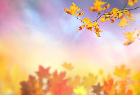 autumn falling leaves abstract background with maple branch Banco de Imagens