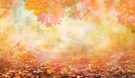 orange and red autumn leaves in beautiful fall park abstract background Banco de Imagens