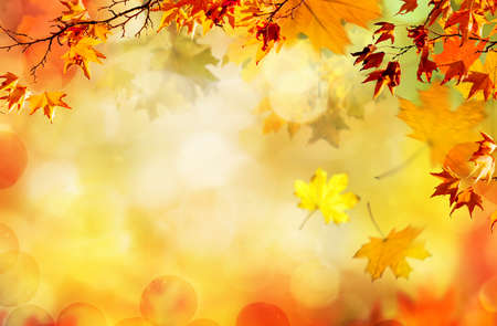 feuilles d'automne orange, fond naturel d'automne