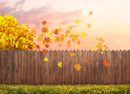 autumn maple tree at backyard Imagens