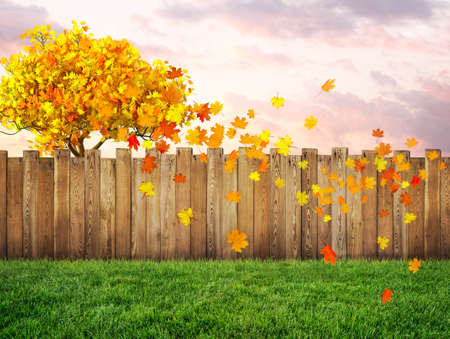 garden backyard at autumn with maple tree and falling leaves Imagens