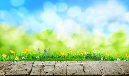 old grunge wooden floor and spring grass background