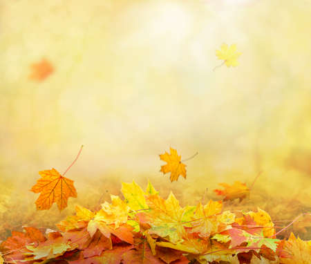 pile of autumn leaves in park, abstract background