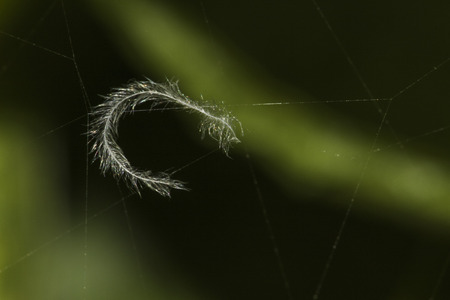 a Feather caught in a web