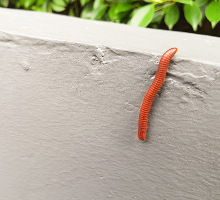 baby earthworm,design for advertising and Illustration.