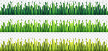 Fresh Green Grass Borders on White Isolated background,vector,illustration.