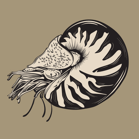 Vector hand drawn illustration of shellfish nautilus in realistic style. Trendy creative artwork in sketch style. Template for postcard banner poster print for t-shirt