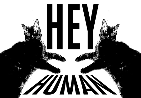 Hey, human. Quote typographical background. Vector hand drawn illustration of fat cats. Template for card, poster. banner, print for t-shirt, pin, badge, patch.
