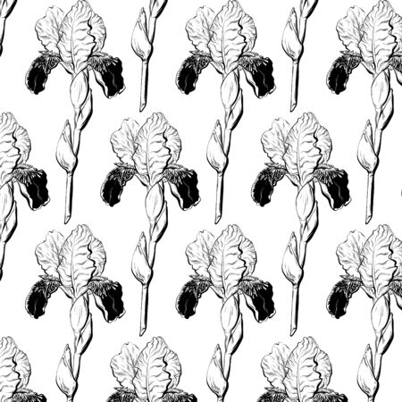 Vector pattern with hand drawn illustration of iris isolated. Creative tattoo artwork.  Template for card, poster, banner, print for t-shirt, coloring,  patch. Иллюстрация