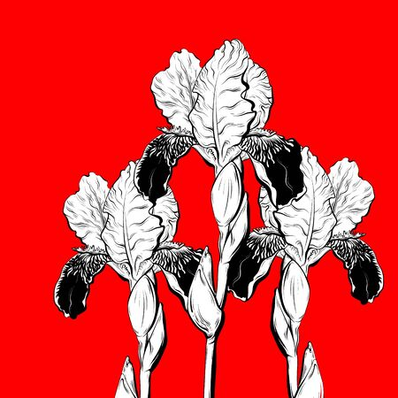 Vector hand drawn illustration of irises isolated. Creative tattoo artwork.  Template for card, poster, banner, print for t-shirt, coloring,  patch. Иллюстрация