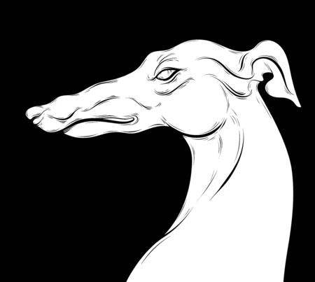Vector hand drawn illustration of angry greyhound. Creative artwork with dog's portrait. Template for postcard, badge, label, print for t-shirt.