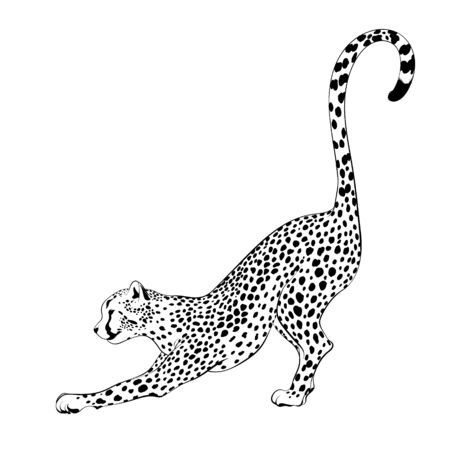 Vector  hand drawn  illustration of stretching cheetah  isolated. Creative tattoo artwork. Template for card, poster, banner, print for t-shirt, label,  patch.