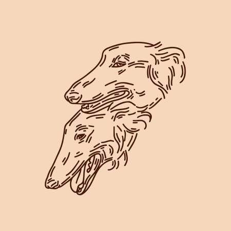 hand drawn illustration of Russian greyhound dogs isolated. Tattoo artwork. Template for card, poster, banner, print for t-shirt, pin, badge, patch.