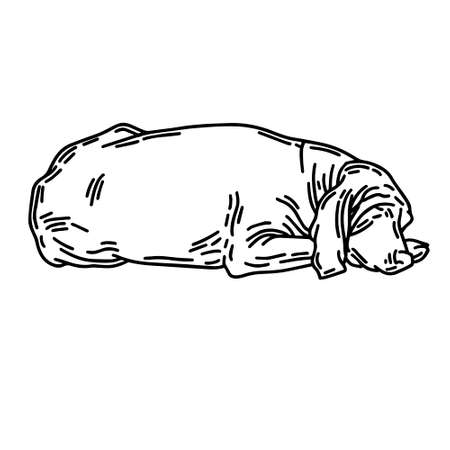 hand drawn illustration of sleeping english coonhound isolated. Tattoo artwork. Template for card, poster, banner, print for t-shirt, pin, badge, patch.