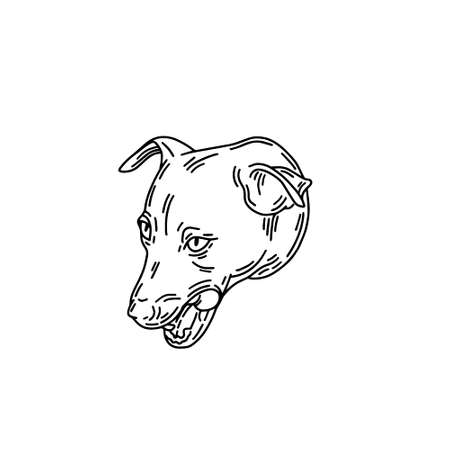 hand drawn illustration of jack russel terier dog isolated. Tattoo artwork. Template for card, poster, banner, print for t-shirt, pin, badge, patch.
