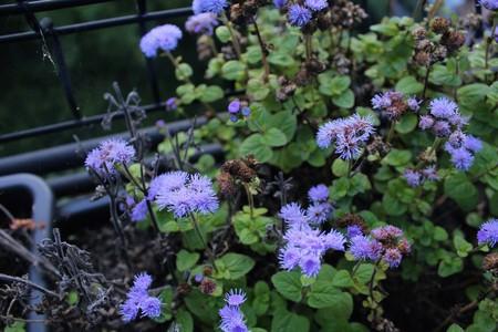 baranda para balcon: Flores púrpura