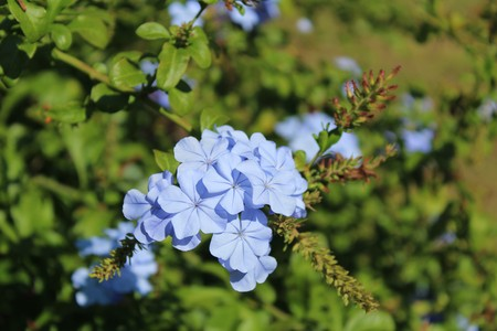 fondos violeta: violet flower for bouquets on green funds