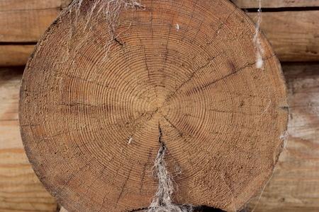 the cut: logs cut