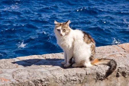 calico cat: Greek calico cat sitting at wall near sea Stock Photo