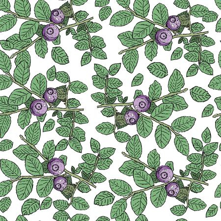 bilberry: seamless pattern with hand drawn vintage wild berries - cranberry, blueberry, bilberry.