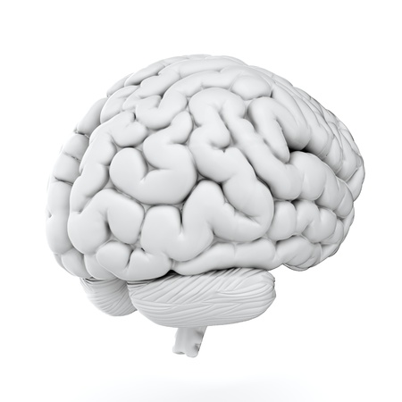 brain and thinking: 3d render of brain on white background
